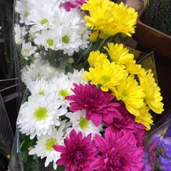 パシャリおでかけワンショット/ライフ/花屋さんの花/スーパーマーケット/おでかけワンショット 3、2019年7月28日、トナリエの花屋…(6枚目)