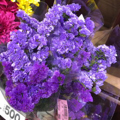 パシャリおでかけワンショット/ライフ/花屋さんの花/スーパーマーケット/おでかけワンショット 3、2019年7月28日、トナリエの花屋…(5枚目)