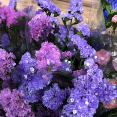 スーパーマーケット/花屋さんの花/至福のひととき/ライフ 2、2019年7月4日、トナリエの花屋さ…(6枚目)