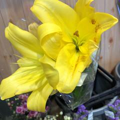 至福のひととき/花屋さんの花/よってって 1、2019年7月12日、よってっての花…(2枚目)