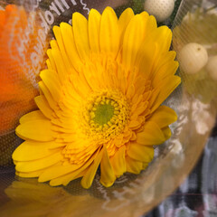 スーパーマーケット/花屋さんの花/至福のひととき/ライフ 2、2019年7月4日、トナリエの花屋さ…(5枚目)