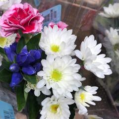 わたしのお盆/スーパーマーケット/花屋さんの花/ライフ 3、2019年8月18日、トナリエの花屋…(9枚目)
