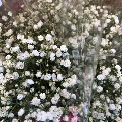 よってって/花屋さんの花/産直市場/残暑見舞い申し上げます/ハンドメイド/プレゼント/... 2021時9月1日(水)、アラニスより愛…(4枚目)
