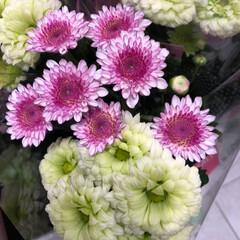 スーパーマーケット/花屋さんの花/ライフ/雨季ウキフォト投稿キャンペーン 2、2019年6月30日、トナリエの花屋…(8枚目)