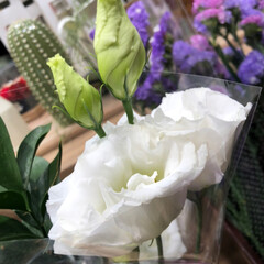至福のひととき/花屋さんの花/スーパーマーケット/ライフ 2、2019年7月2日、トナリエの花屋さ…(5枚目)