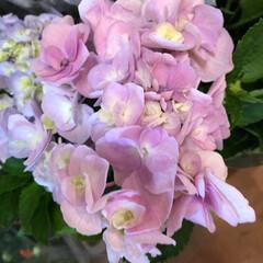 花屋さんの花/ありがとう/よってって/七夕飾り/季節インテリア/七夕インテリア/... 3、2020年6月26日、本日、久米診療…(2枚目)