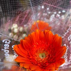 至福のひととき/花屋さんの花/スーパーマーケット/ライフ 2、2019年7月2日、トナリエの花屋さ…(6枚目)
