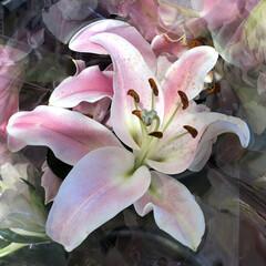花屋さんの花/ありがとう/よってって/七夕飾り/季節インテリア/七夕インテリア/... 3、2020年6月26日、本日、久米診療…(10枚目)
