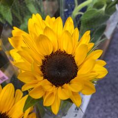 ライフ/スーパーマーケット/至福のひととき/花屋さんの花 2、2019年7月7日、トナリエの花屋さ…(6枚目)