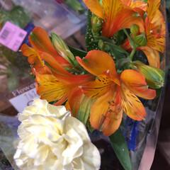 スーパーマーケット/ライフ/至福のひととき/花屋さんの花 1、2019年7月12日、トナリエの花屋…(5枚目)