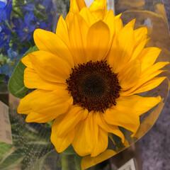 ライフ/スーパーマーケット/至福のひととき/花屋さんの花 2、2019年7月7日、トナリエの花屋さ…(4枚目)