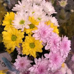 スーパーマーケット/花屋さんの花/ライフ/地元のオススメ 2、2019年8月7日、トナリエの花屋さ…(5枚目)