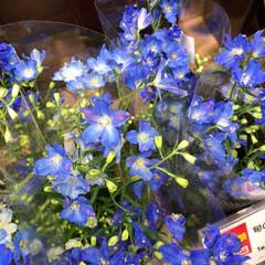 ライフ/スーパーマーケット/至福のひととき/花屋さんの花 2、2019年7月7日、トナリエの花屋さ…(3枚目)
