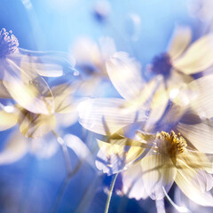 黄色/青/多重露光/花/はじめてフォト投稿 お花が踊ってるみたい。