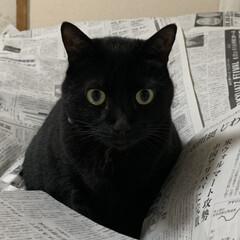 新聞/猫/フォロー大歓迎/LIMIAペット同好会/にゃんこ同好会/LIMIA/... 情報に埋もれる。