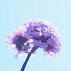紫/花/花束/おでかけワンショット 小さい花束みたい