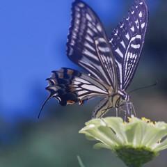 花/蝶/フォロー大歓迎/LIMIAファンクラブ/LIMIAおでかけ部/風景/... 地面を這って、殻にこもったから、こんなに…