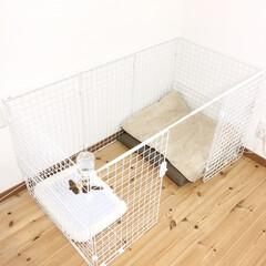ワイヤーネット/犬/ペット/ペットサークル/ペットケージ/ケージDIY/... ダイソーのワイヤーネットで、犬用のケージ…(2枚目)