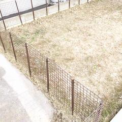 ワイヤーネット/芝生/庭/ドッグラン/リミアな暮らし/フォロー大歓迎/... ガーデニング用の支柱とワイヤーネットを結…