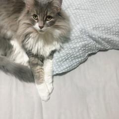 猫のいる暮らし/枕カバー/暮らし/無印良品 (  '-' )ジッ…。  添い寝して…