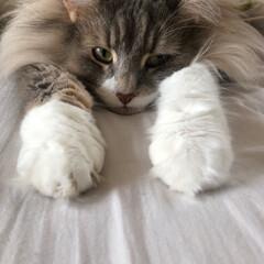 猫のいる暮らし/ネコ好きさんと繋がりたい フィガロ飛びます! ・ 笑 ・ スーパー…(2枚目)