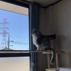 にゃるそっく/猫のいる風景/猫のいる暮らし/愛猫/猫/おうち時間 ニャルソック🐾  お気に入りの場所◌ 。…