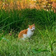 猫🐱/にゃんこ同好会 仕事の帰り道に出会ったにゃんこです
