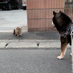 柴犬/LIMIAペット同好会/わんこ同好会/にゃんこ同好会