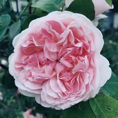 花の写真を撮るのが好き/花の写真/散歩道 散歩道にて