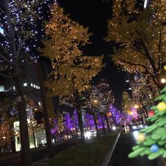 クリスマス2019 御堂筋のイルミネーション⭐︎