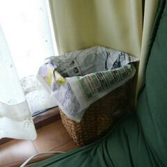整理収納/整理収納アドバイザー/賃貸インテリア/ゴミ袋/レジ袋/レジ袋有料化 【レジ袋有料化にあたり】  わが家ではレ…(4枚目)