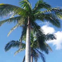 沖縄/おでかけワンショット 青空とヤシの木・・・