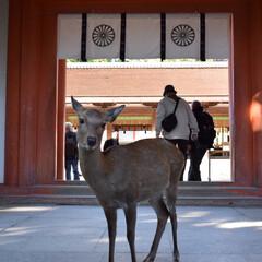 奈良春日大社/鹿/おでかけワンショット