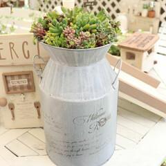 雑貨/ハンドメイド/DIY/風景/暮らし/住まい/... ミルク缶をお迎えして、寄せ植えしたよ😃😘…