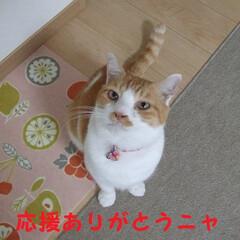 ざぶとん星星/にゃんこ同好会 応援ありがとう(*^▽^*) 155-1…