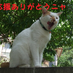 にゃんこ同好会 応援してくれた皆さん(*^▽^*)ありが…