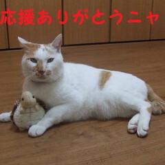 しらす/にゃんこ同好会 チビちゃん(*^▽^*)おめでとうニャヾ…