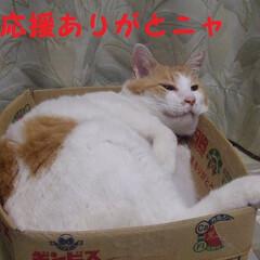 にゃんこ同好会/マツコ 623ー584で勝ったニャヾ(o´∀`o…