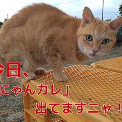 夏のお気に入り/熱い戦い/夏の思い出/茶トラ/にゃんカレ 3回戦奮闘中! http://jafma…(1枚目)