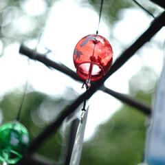 お参り/神社/風鈴/夏/おでかけワンショット 琴崎八幡宮でのお参りでの写真 風鈴がある…