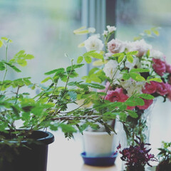 窓際/花/おでかけワンショット 庭園の窓際に咲く小さなお花(1枚目)