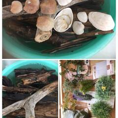 セリア 今日は海🐚 材料流木と、貝殻拾ったけど。…