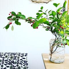 ファブリック/ジューンベリー/オフィス/アトリエ/グリーン/暮らし ジューンベリーがお部屋にきました🍒小さく…