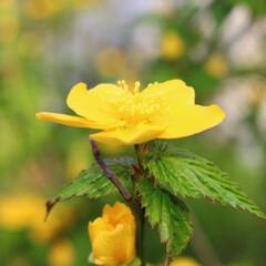 はじめてフォト投稿/花/黄色 可愛い小さなお花でした。