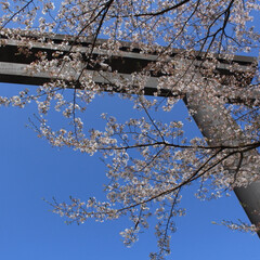 地元/熊野大社/フォロー大歓迎/はじめてフォト投稿 熊野大社。父とデートで。