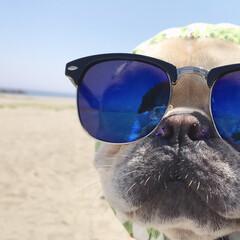 夏模様 夏真っ盛り⛱