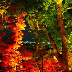 紅葉スポット 竈門神社✱(8枚目)
