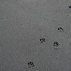 足跡/浜辺/海/おでかけワンショット ある浜辺にて 早朝から猫もおでかけかな