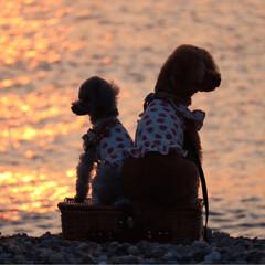 明石海峡公園/淡路島/わんこ同好会/おでかけ/うちの子自慢 淡路島で1日楽しんで来た時の写真です
