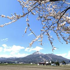 遠出/旅行/令和元年フォト投稿キャンペーン/令和の一枚/おでかけ/風景 令和になってから初の遠出で撮った1枚 桜…(1枚目)